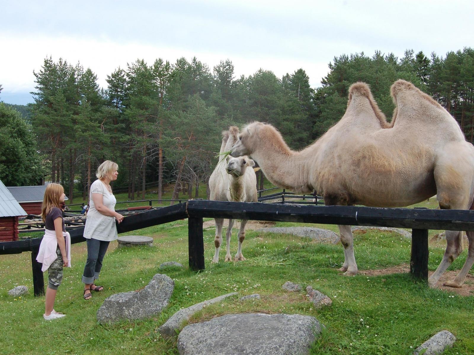 Junsele Djurpark Zoo | Hga Kusten